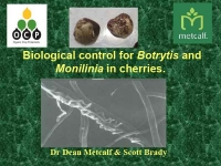 Dr Dean Metcalf & Scott Brady - Biological control for Botrytis and Monilinia in cherries