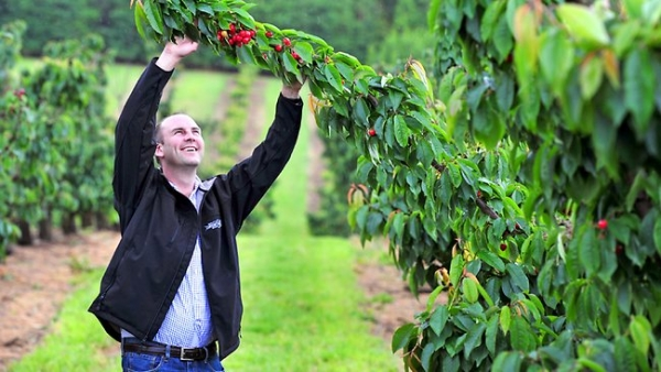 U-Pick success for Riseboroughs' Cherryhill Orchards
