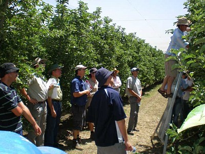Cherry growers in orchard